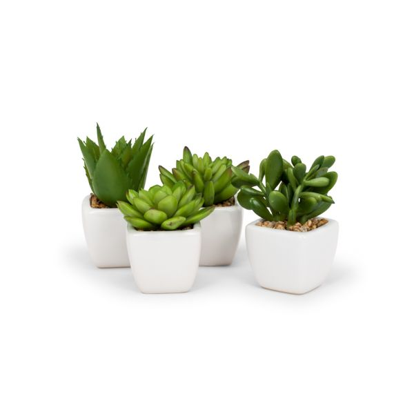 Succulents in Tapered Pot-Set of 4